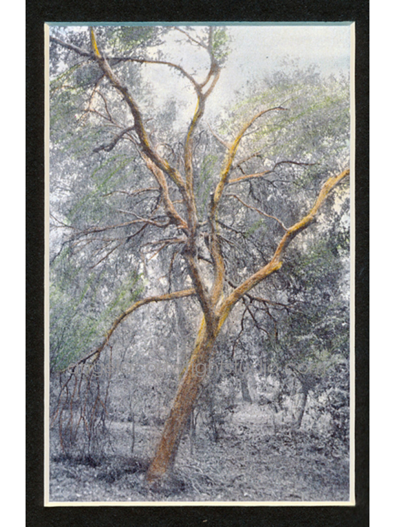 the crone matted print