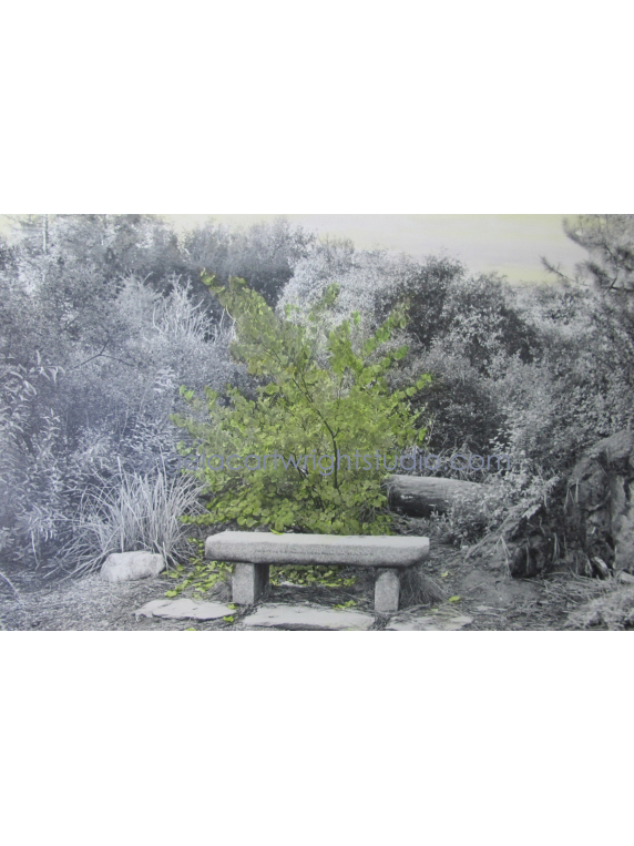 Bench For Zen Birds